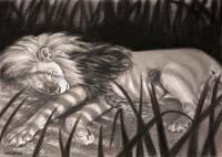 Dreams Of Zebras