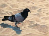 Pigeon Footed