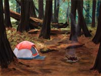 Redwood Campsite