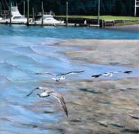 Sandbar Skimming Seagulls