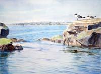 Tidepool With Terns