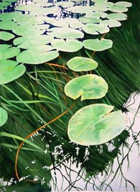 Tranquil Lily Pads